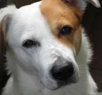 Blogparade für bloggende Hundebesitzer