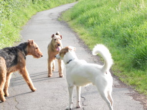 Sam, Toby und Jane