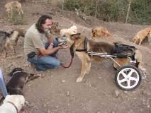 Ein-sicherer-Ort-fuer-alte-Hunde-mit-Behinderung160
